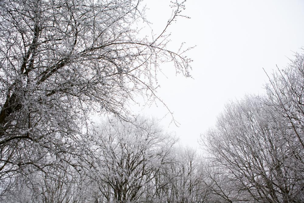 winter-scenes-inspire-styling-14.jpg