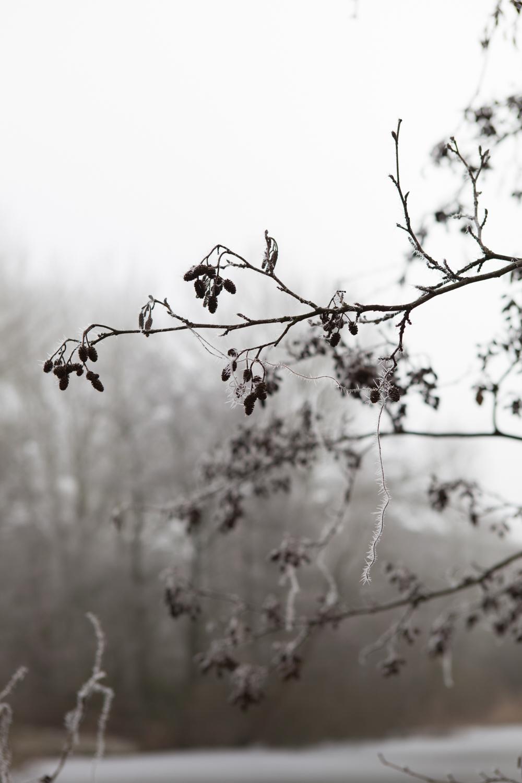 winter-scenes-inspire-styling-5.jpg
