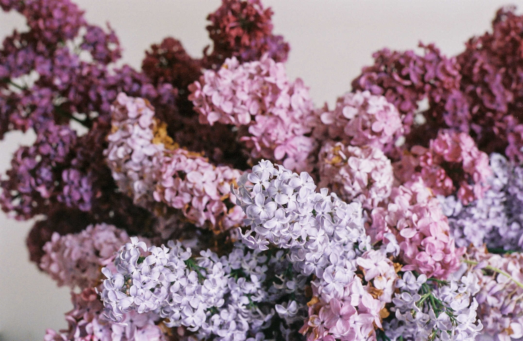 whimsical purple flower cloud - anne van midden