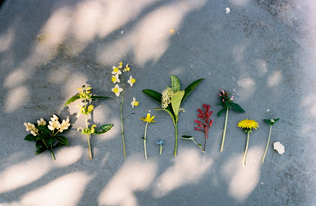 spring on film - annevanmidden