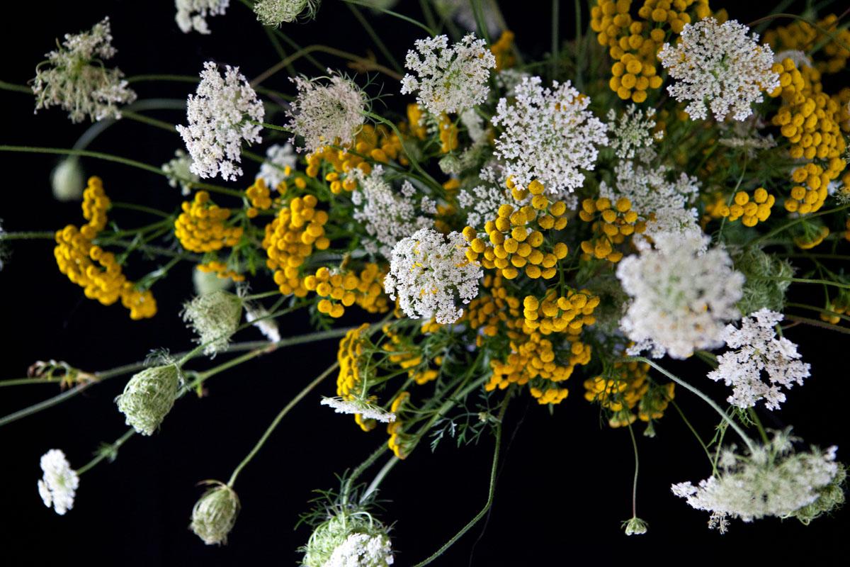 queen annes lace flower cloud - annevanmidden