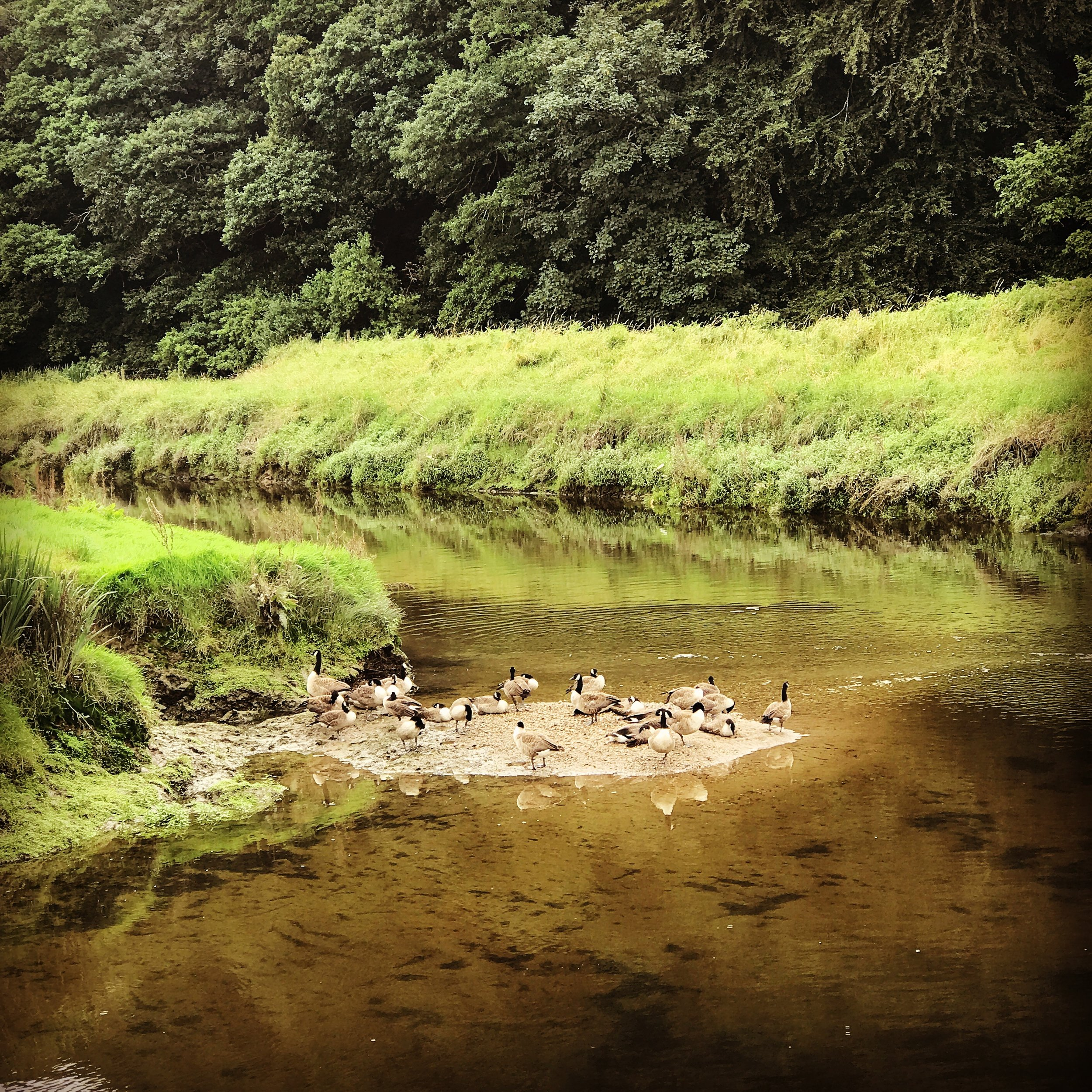 The river Camel and nearby Camel Trail in Cornwall