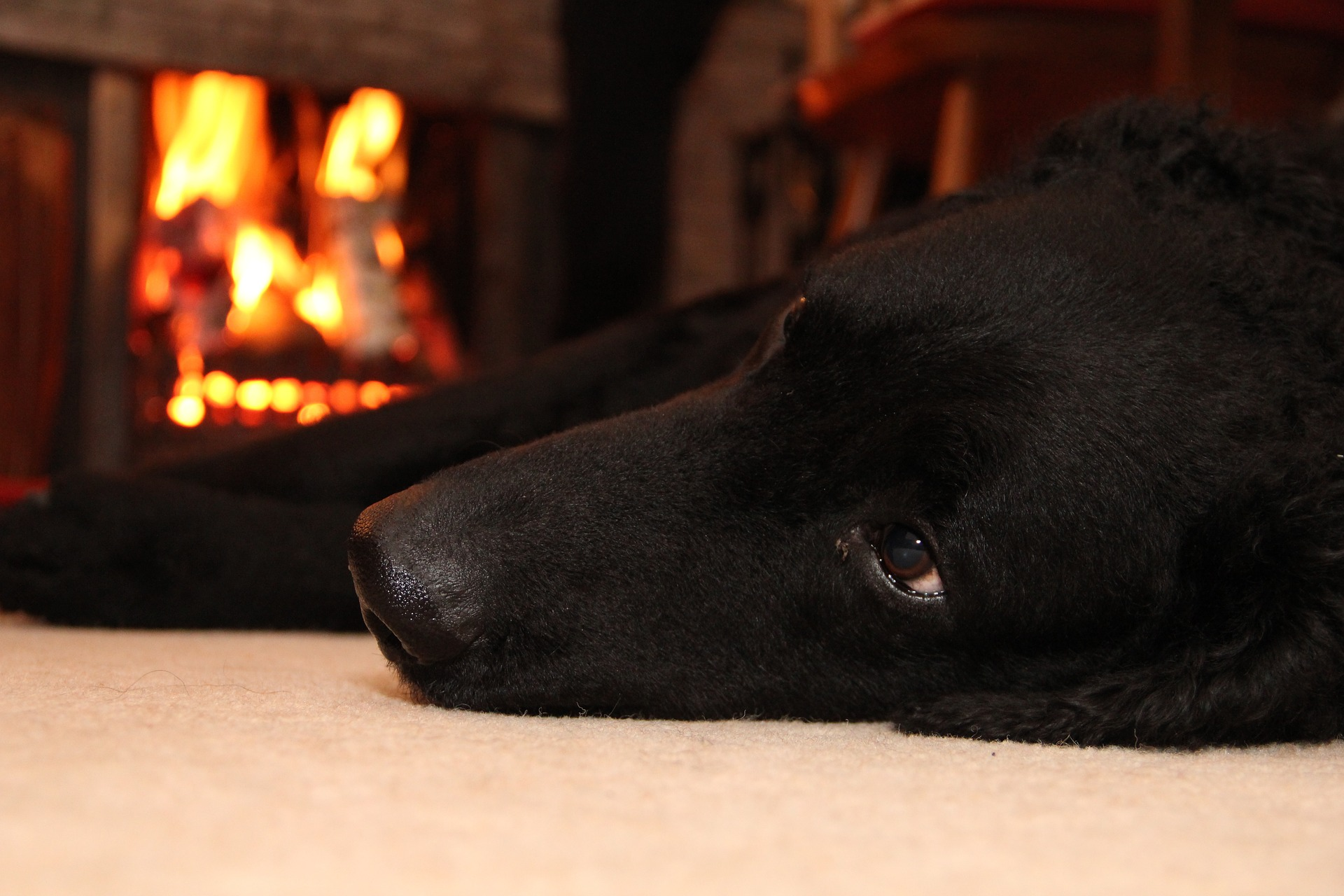 Top 5 dog-friendly restaurants with a log fire in North Cornwall