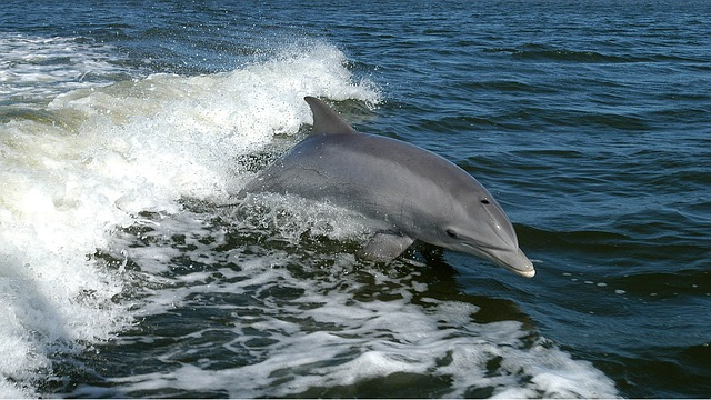 See dolphins on a wildlife tour in Cornwall