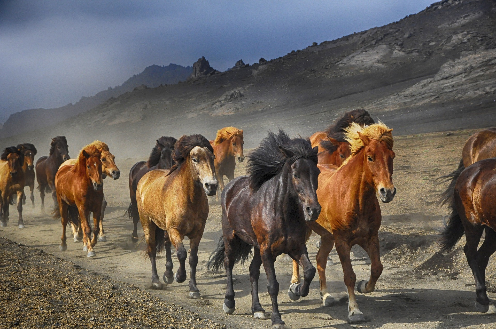 horses-2360048_1920.jpg