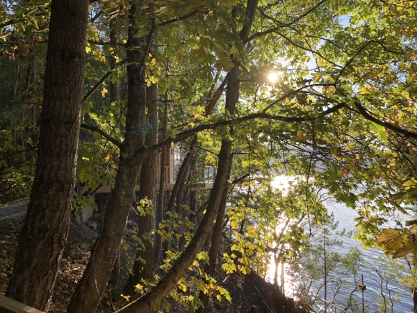 sunlight peeking through the arbutus trees. enso Treehouse.