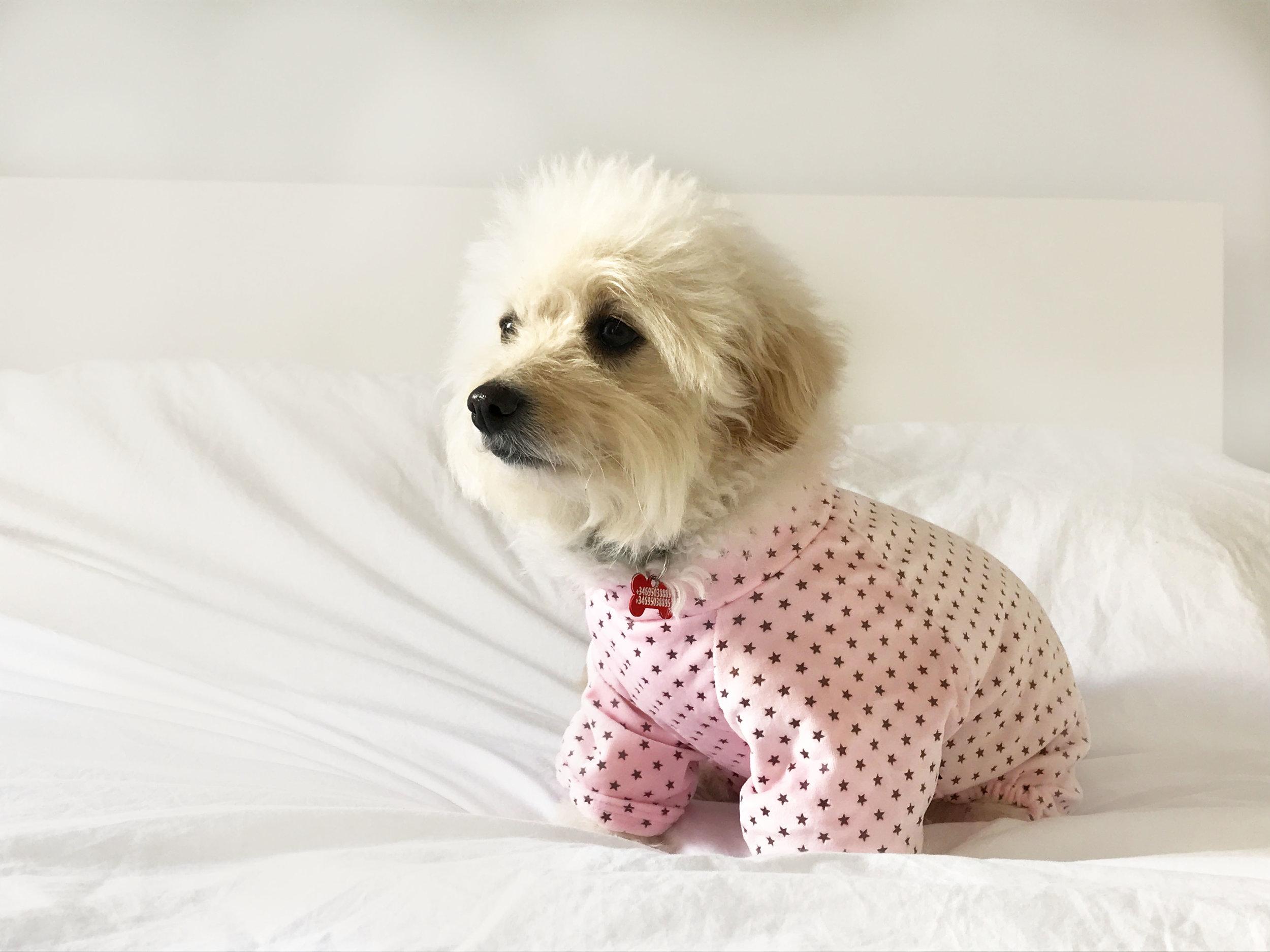 pijama para perro