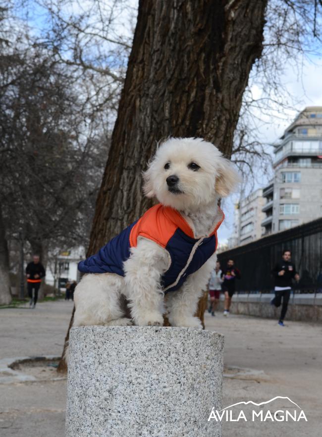 Abrigo para perro impermeable