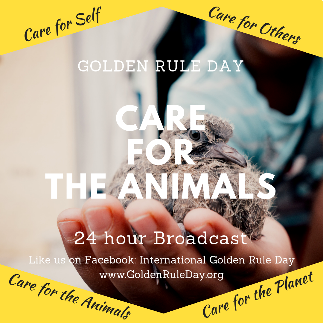 Caring for animals - Golden Rule Day 2019