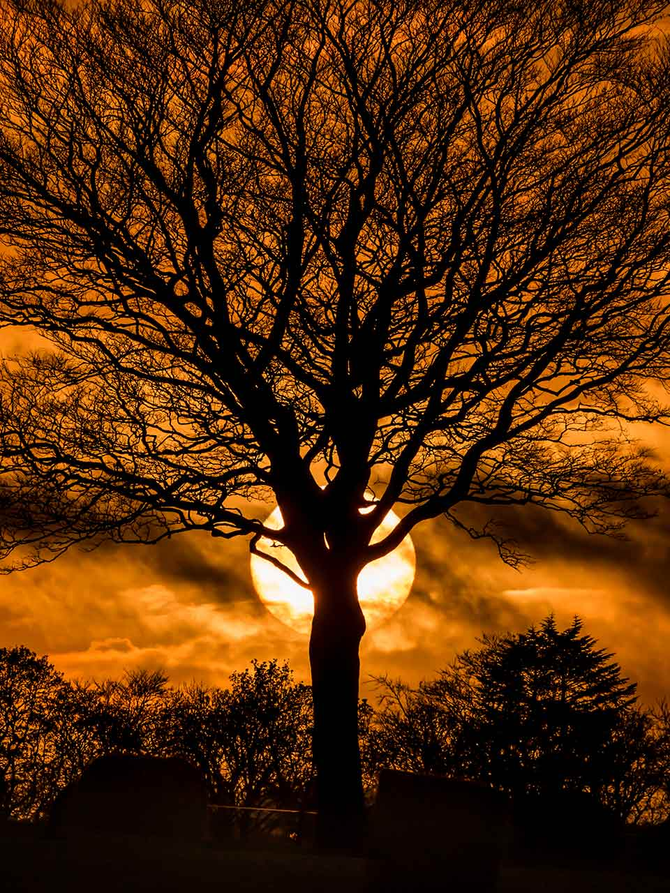 tree-sunset-graphic-as-fuck-1280-wee.jpg