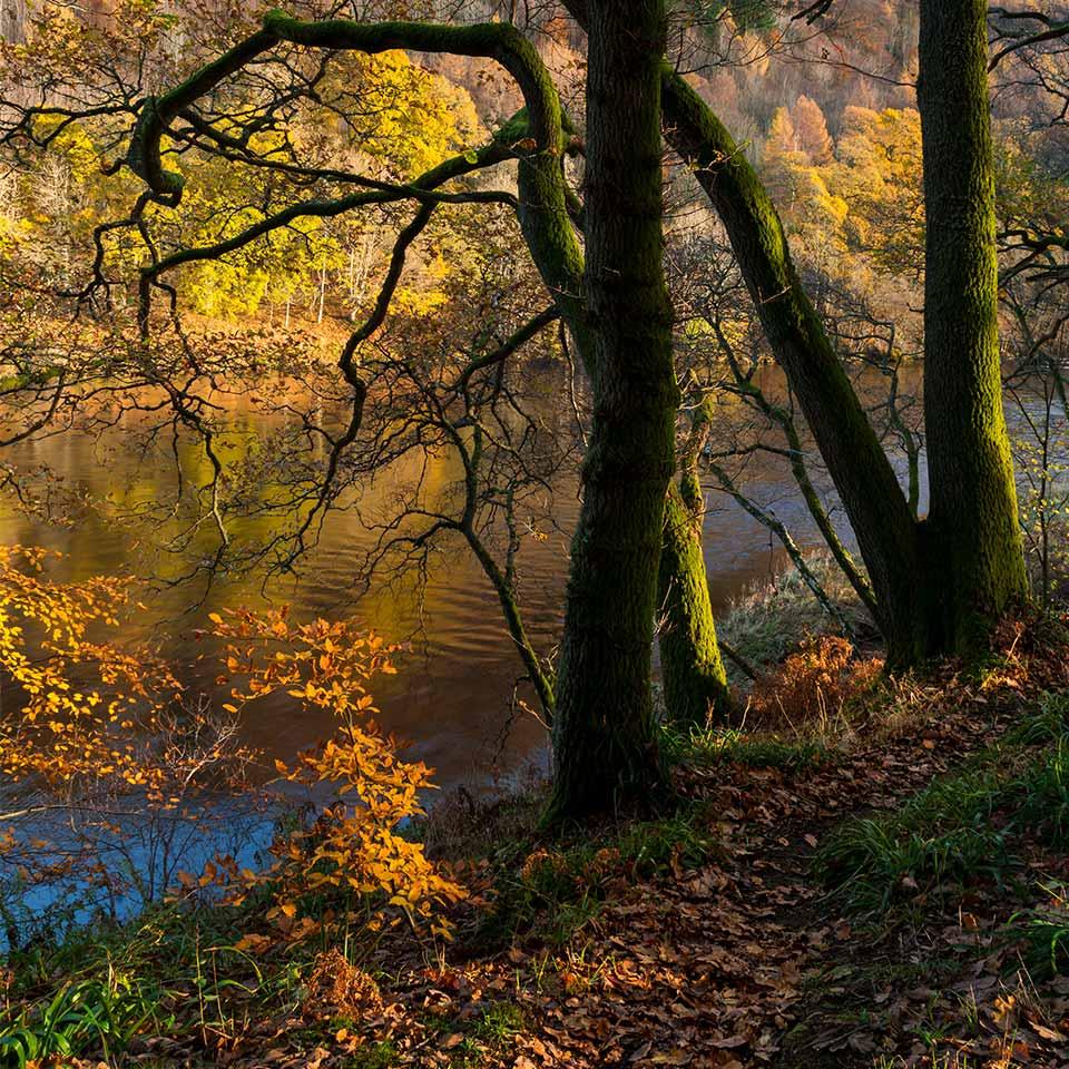dunkeld-riverside-walk-1x1-960-wee.jpg