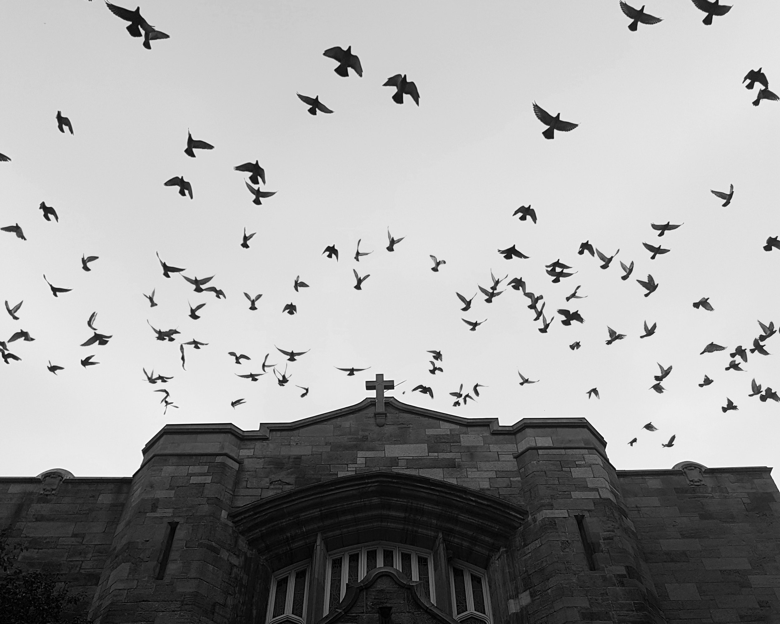 birds church.jpg