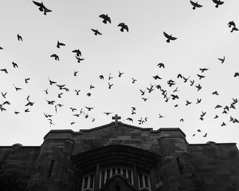 birds church-7.jpg