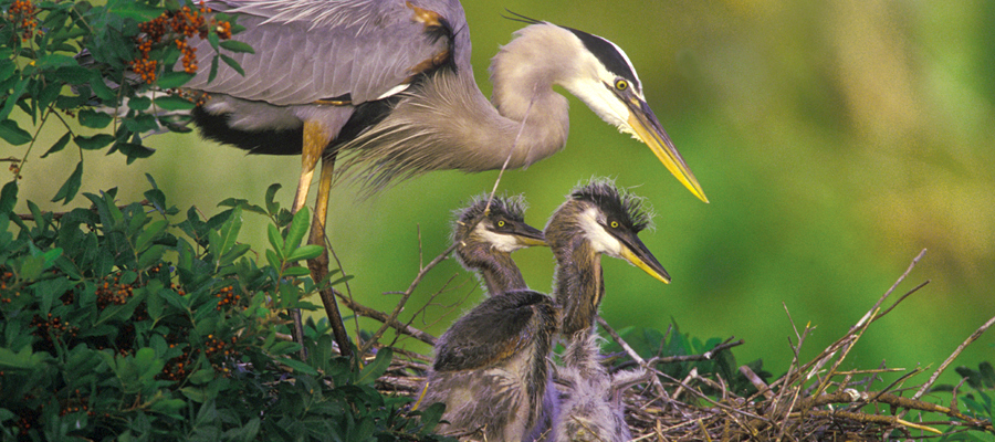WHAT WE DO   VAAS works to foster the cause of conservation with an emphasis on birds and their habitat.   FIND OUT MORE