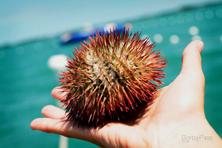Urchin2.jpg