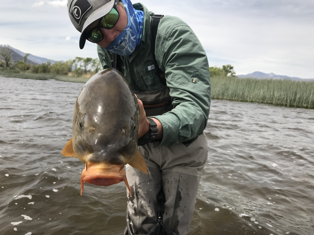 With a mug only a mother could love carp offers fly fishers the biggest challenge of any fish in the Eastern Sierra.
