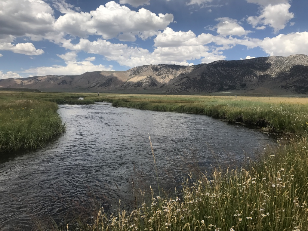 The upper Owens River meanders through alpine meadows, making it a great spot for beginner fly fishers and experts alike.