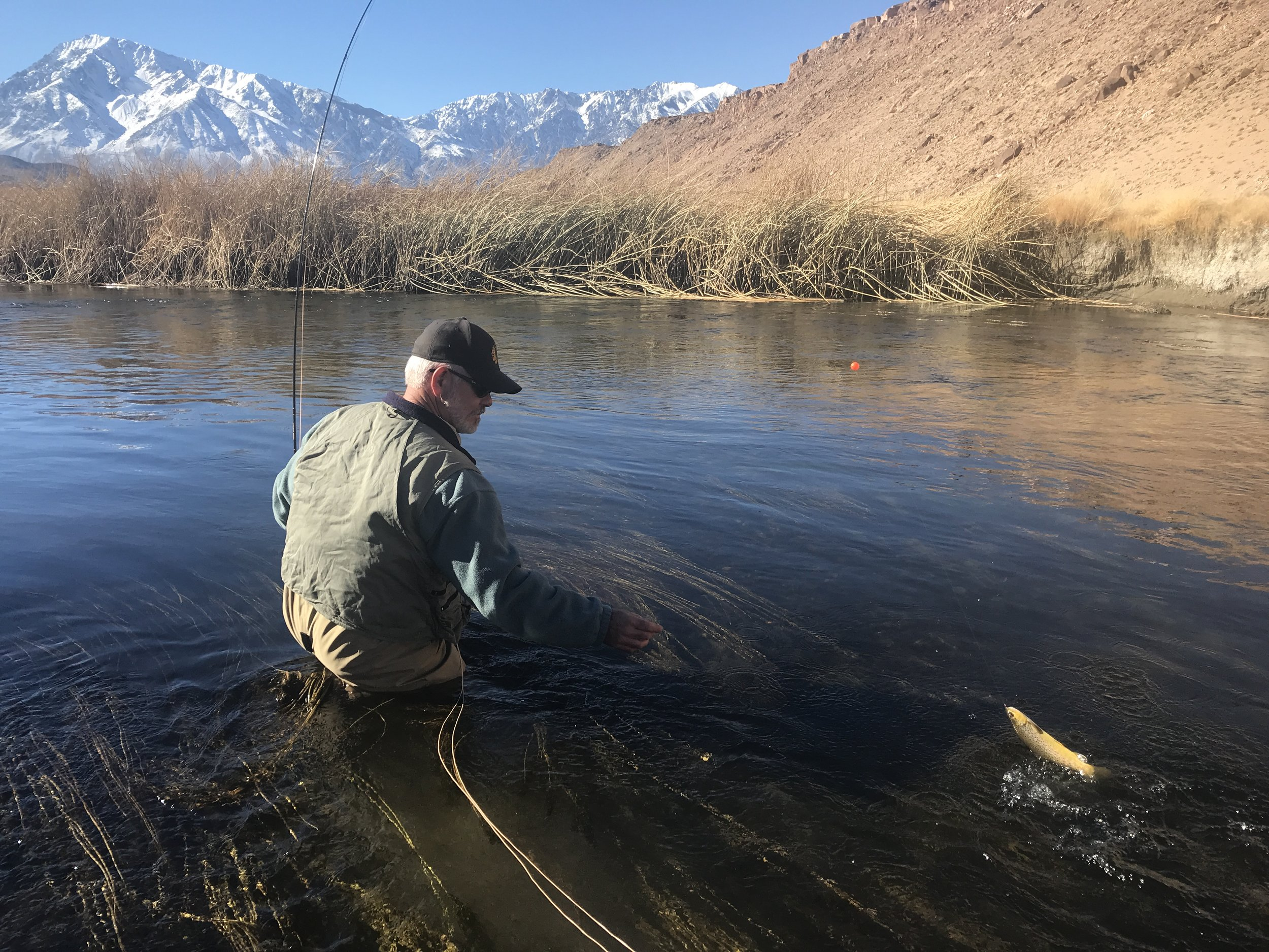 Wild brown trout are great adversaries for fly fishers in the wild trout section of the lower Owens River.