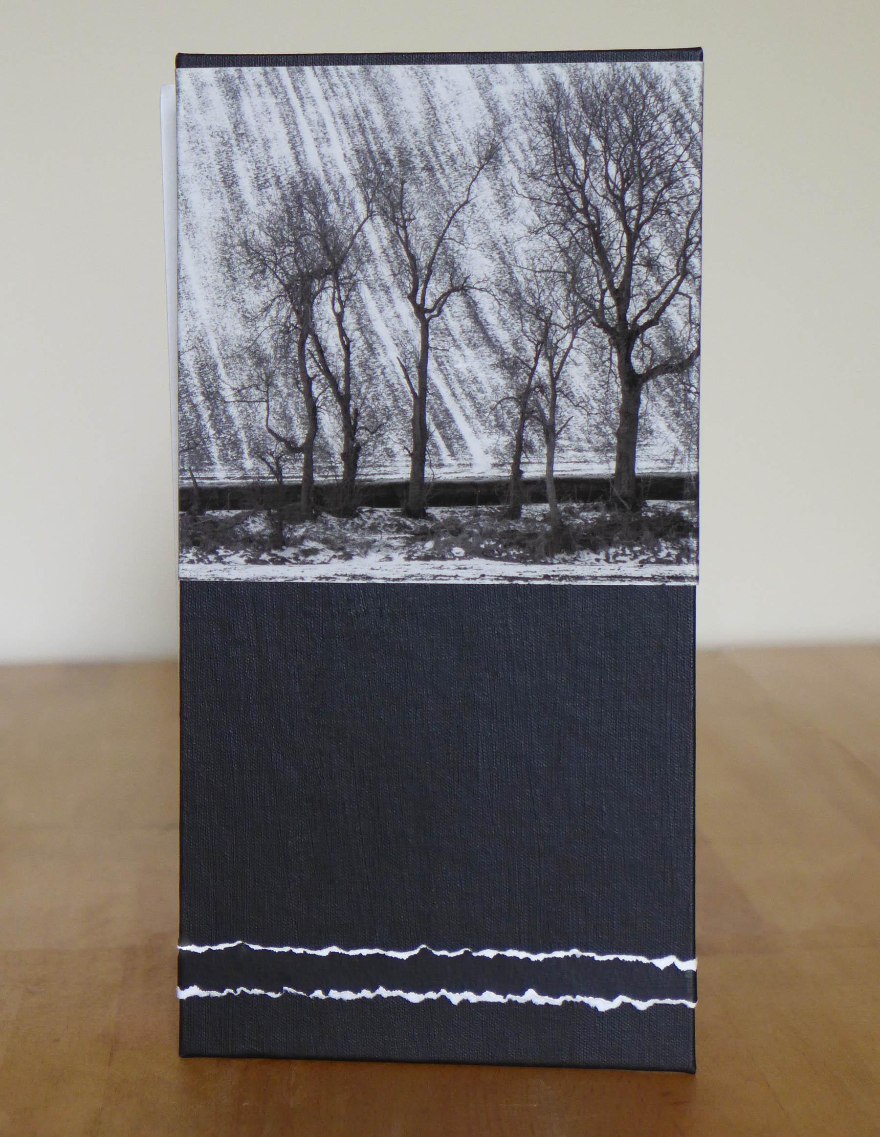 Tree Line Flag book cover