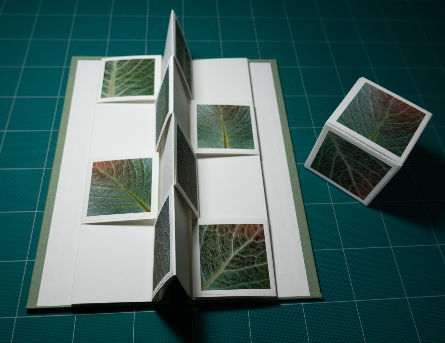 Savoy Leaves book opened and photo cube