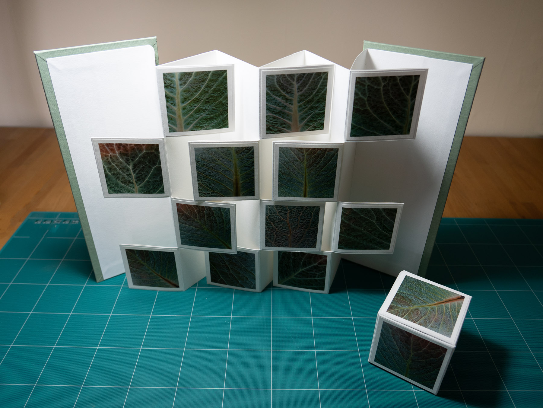 Savoy Leaves book extended and photo cube.