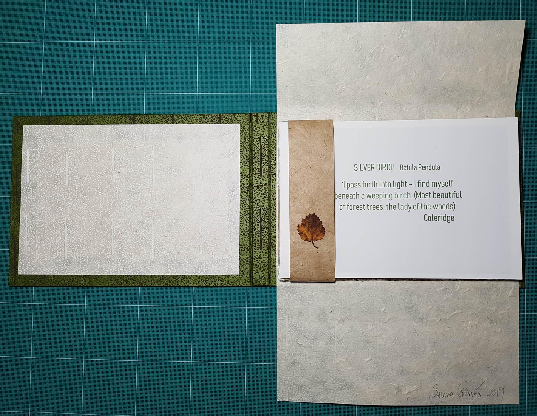 Opening Silver Birch - Unbound