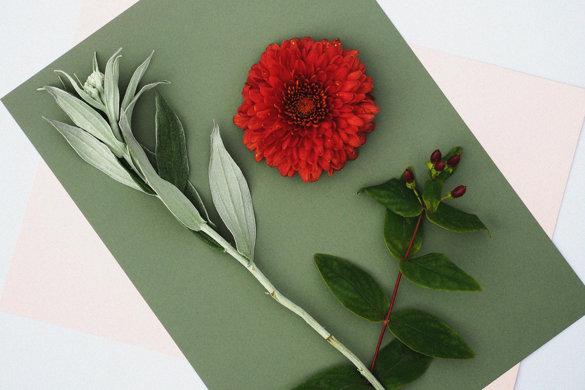 WildEscape-Floral-Design.jpg