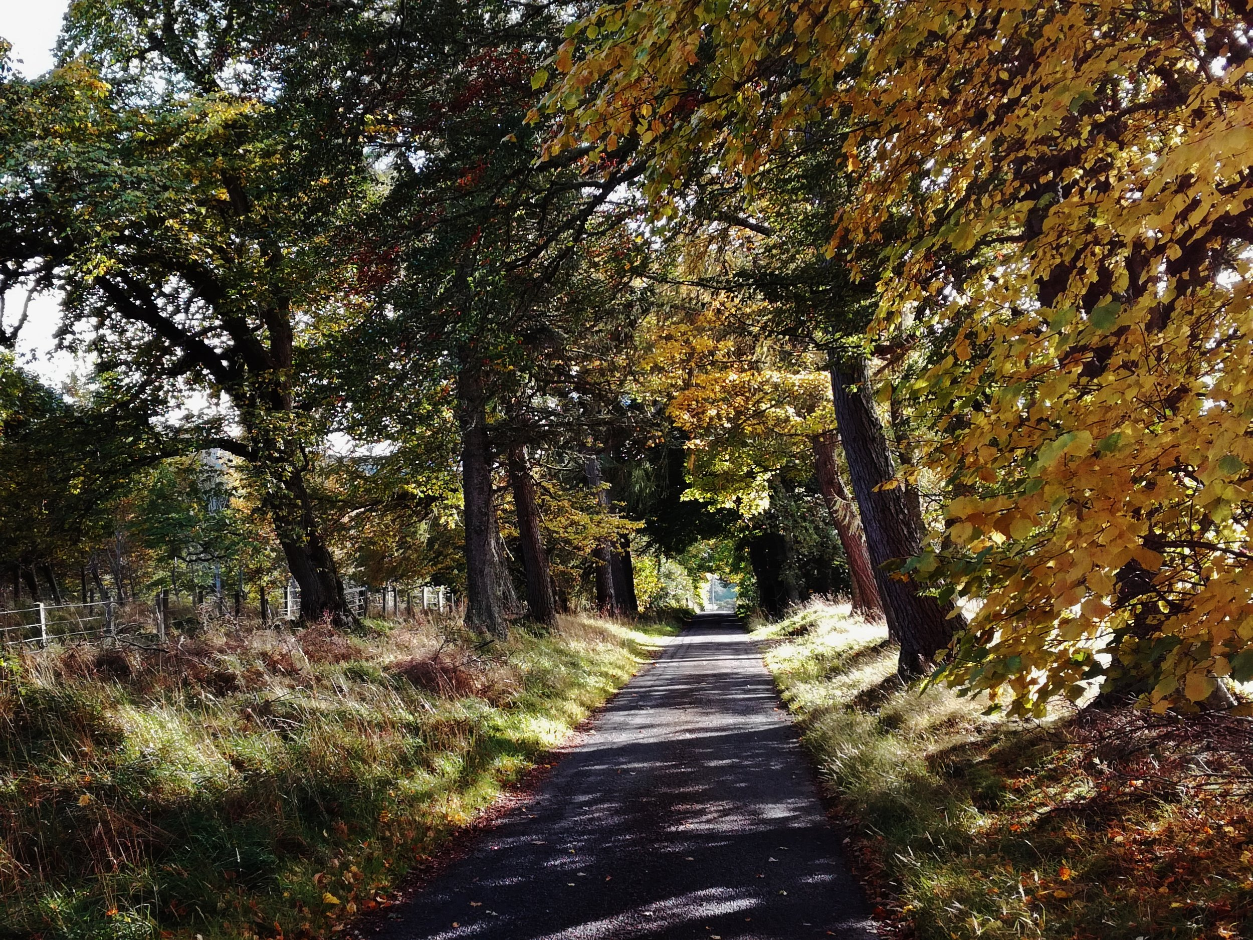 Autumn in Inverness-shire, tours with walks, small group adventures, Roaming Scotland.jpg
