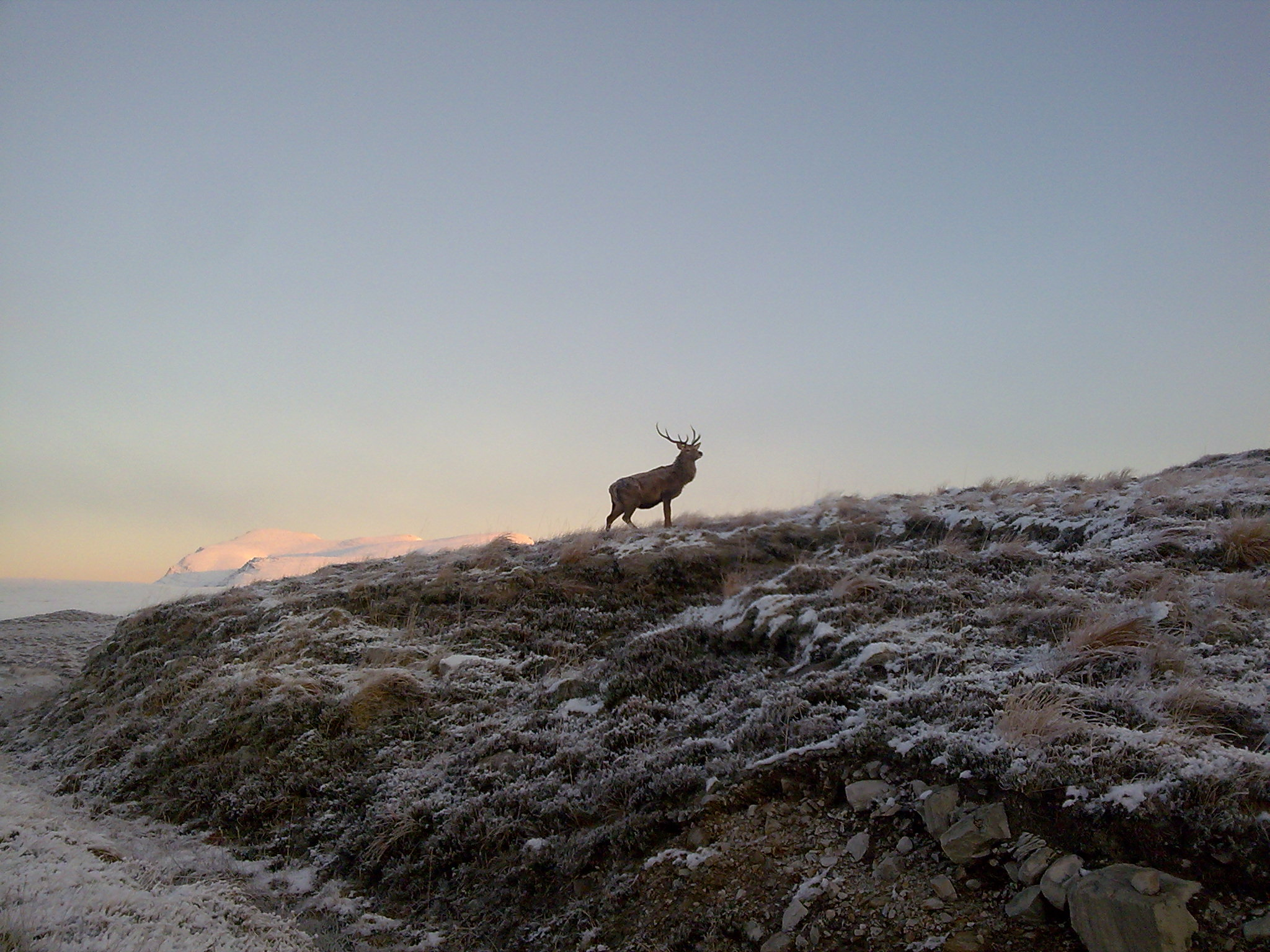 Stag at winter sunrise -  Tour & Walk in small groups - Roaming Scotland..jpg