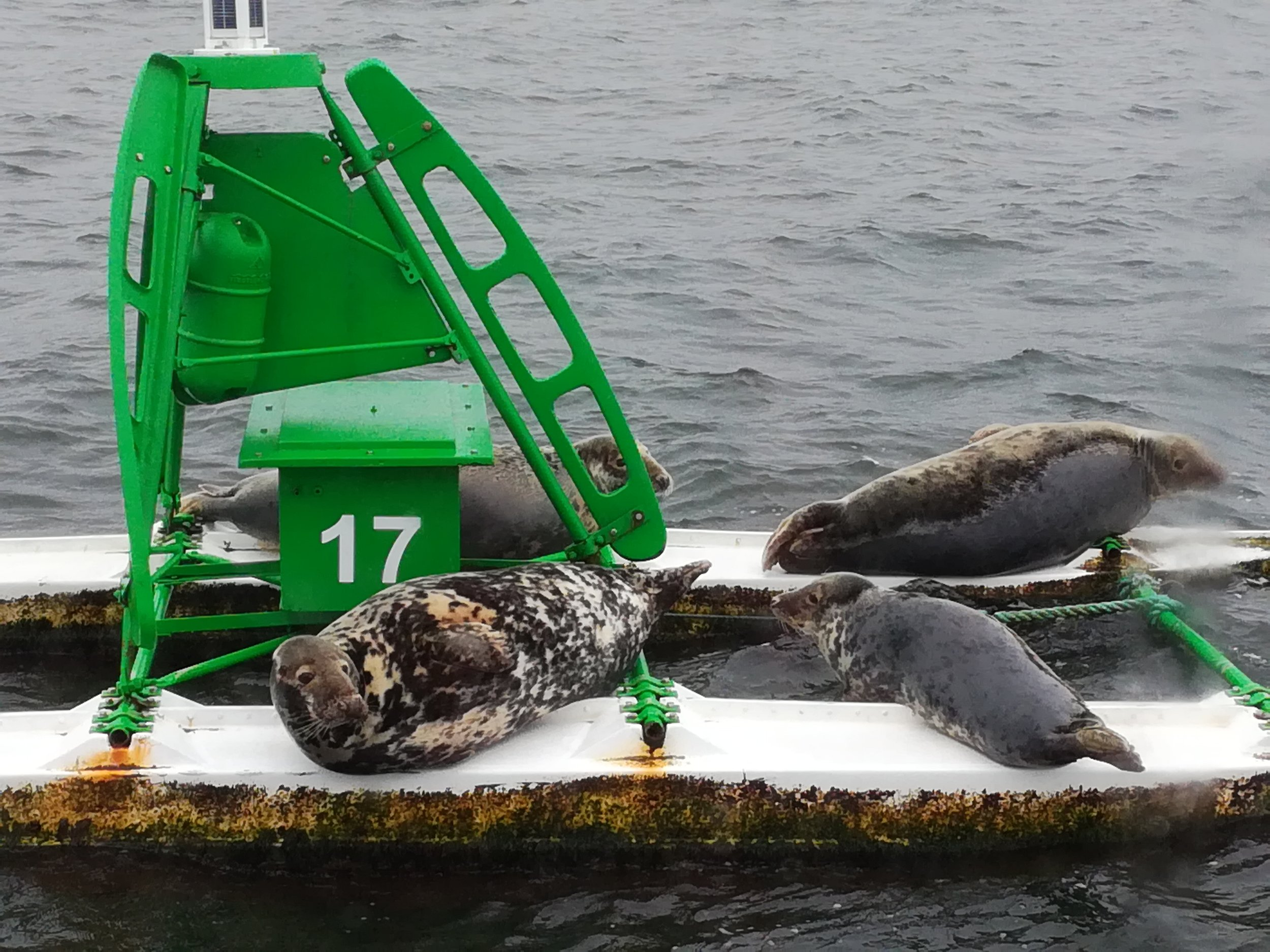 A seals' outing floating on a catamaran!