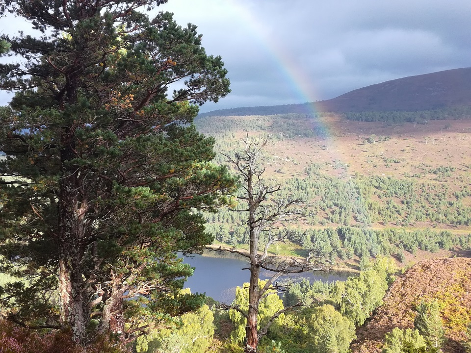 Scottish Cairngorms, Scottish tours with walks, small group adventures, Roaming Scotland.jpg