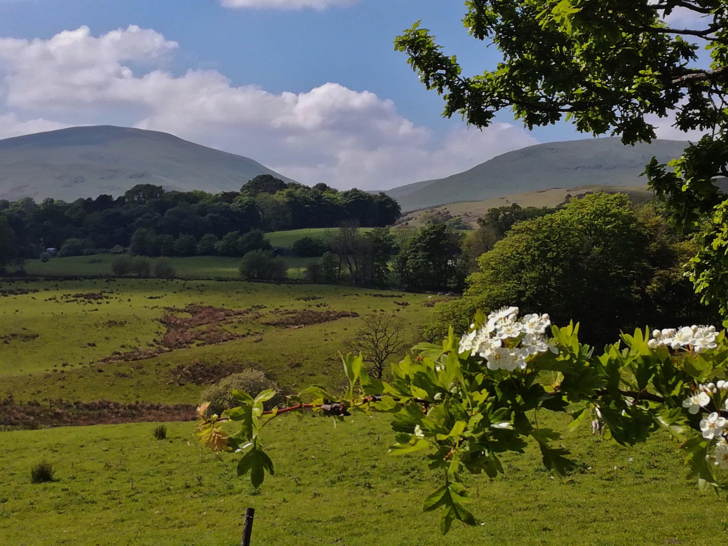 Ochill Hills, Clackmannanshire -  Tour & Walk in small groups - Roaming Scotland.jpg