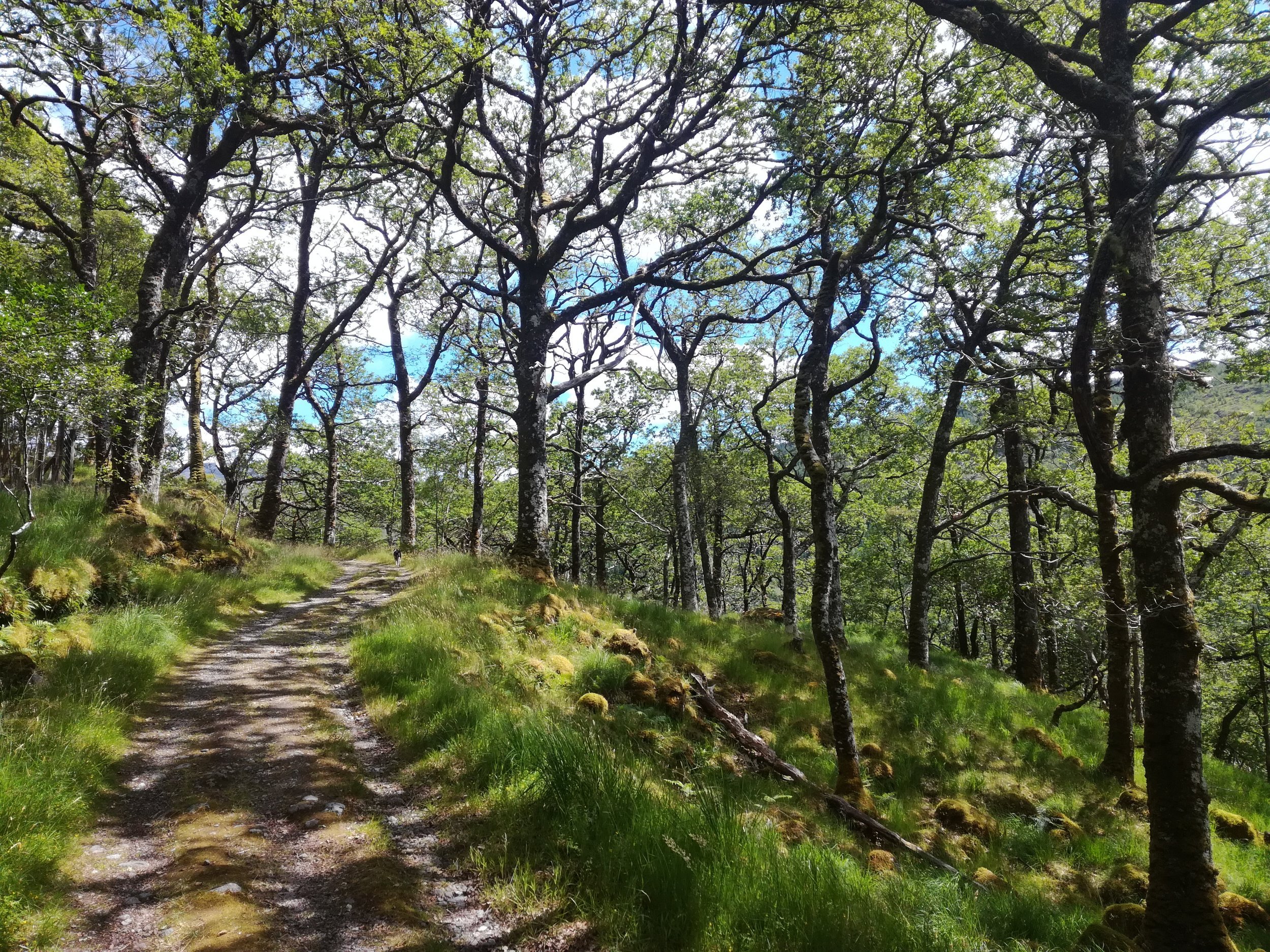 Ariundle Woods, Tour & Walk Scotland in small group adventures - Roaming Scotland.jpg