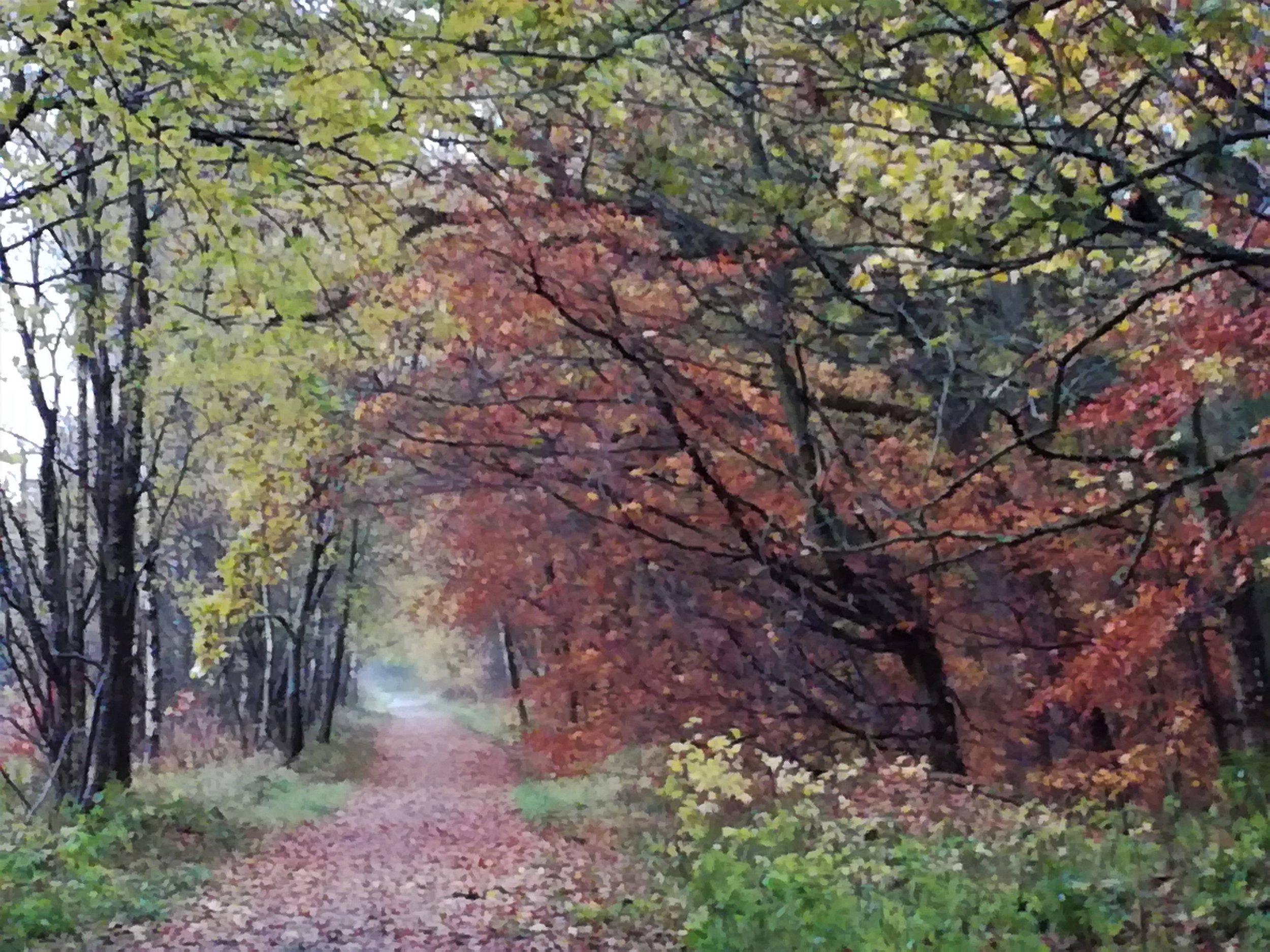 Clackmannanshire autumn
