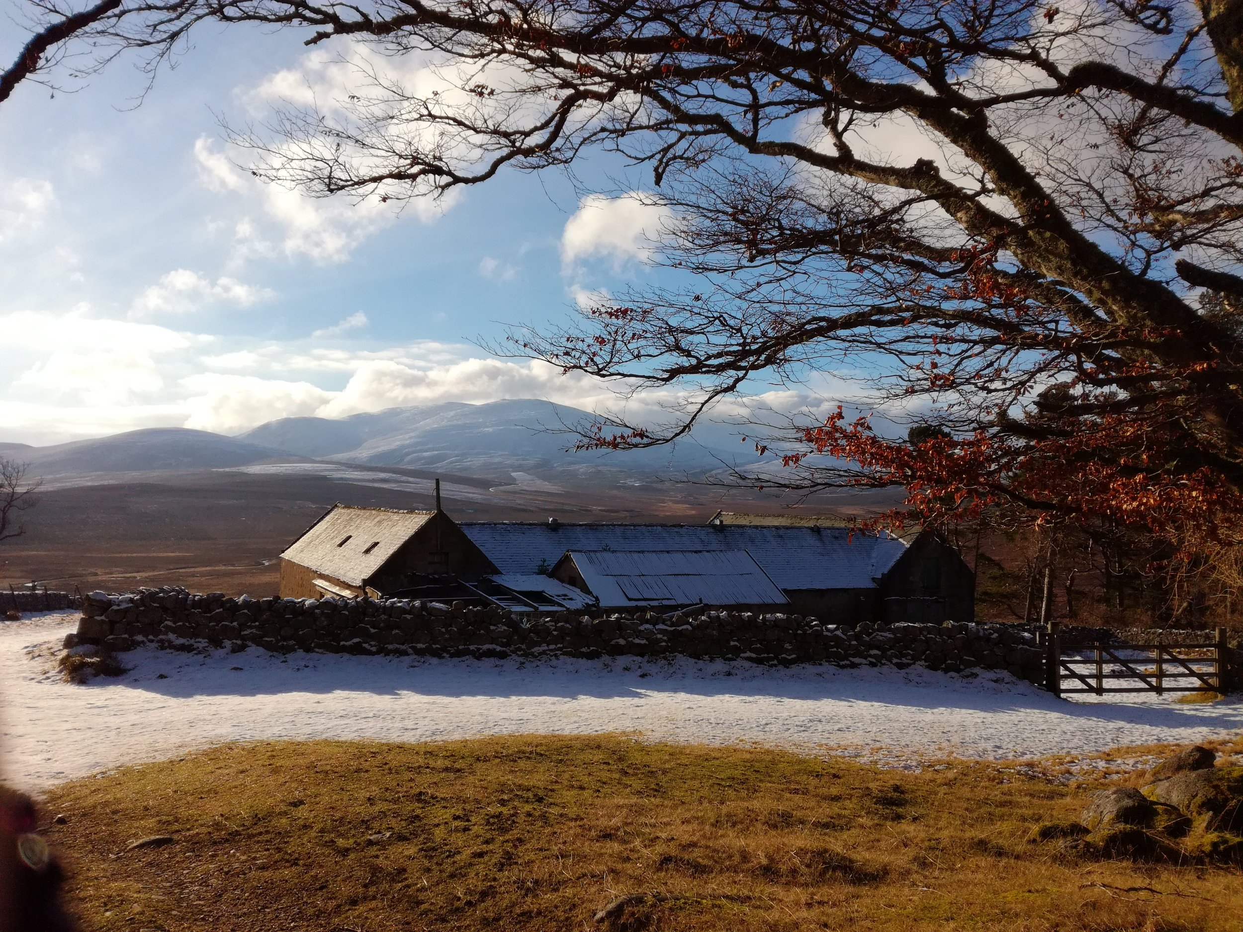 Cairngorms, Tour & Walk Scotland in small group adventures - Roaming Scotland.jpg