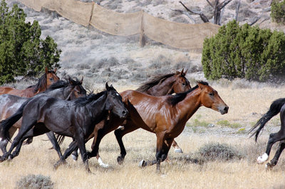 Take Wild out of Wild Horse.jpg