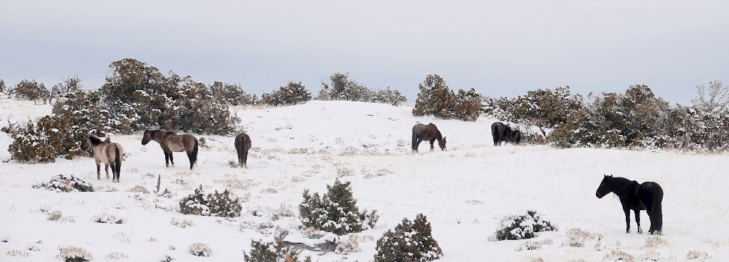 Above Doc, far right, his mares and a barely visible Ryden