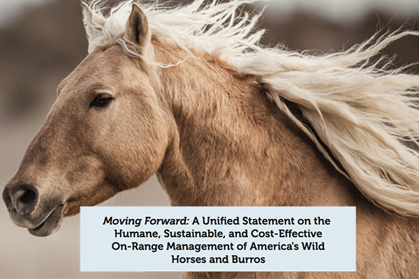 Unified Statement Image.png