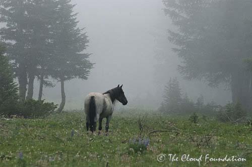 Dancer_in_fog.jpg