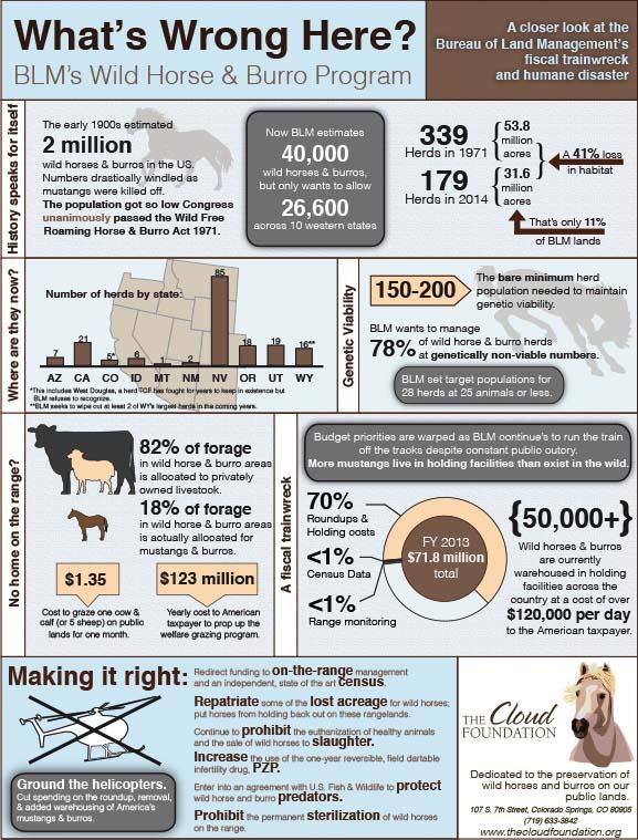 BLM Infographic.jpg