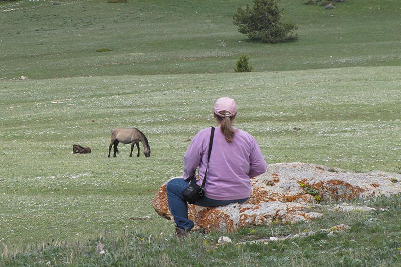 Visit a Herd 1.jpg