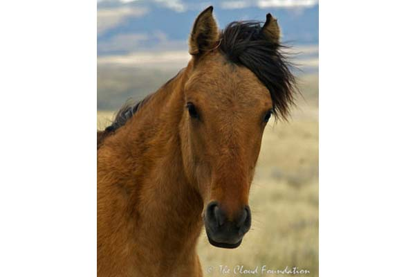 Lily, Filly