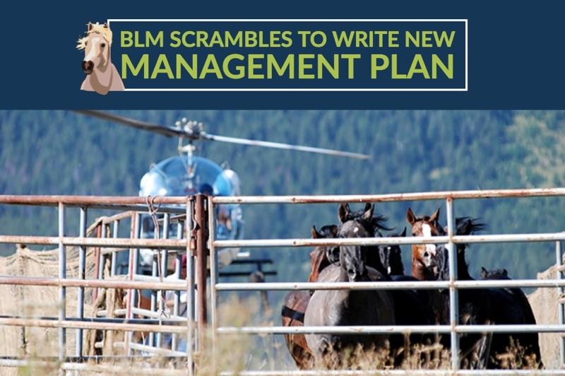 BLM PRESS.jpg.jpeg
