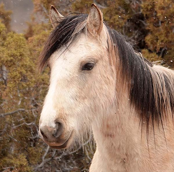 Jasmine and Ryden on Cheyenne Flats
