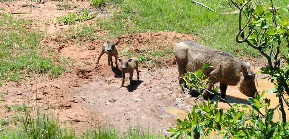 Warthogs-on-Horseback-Safari_REV.jpg