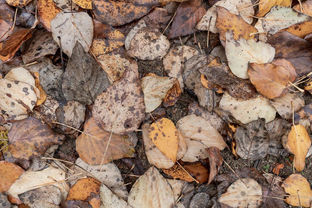 535_Elk_Trail-149.jpg