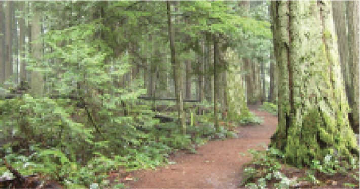 Qualicum Beach Community Park  -  3.6 kms