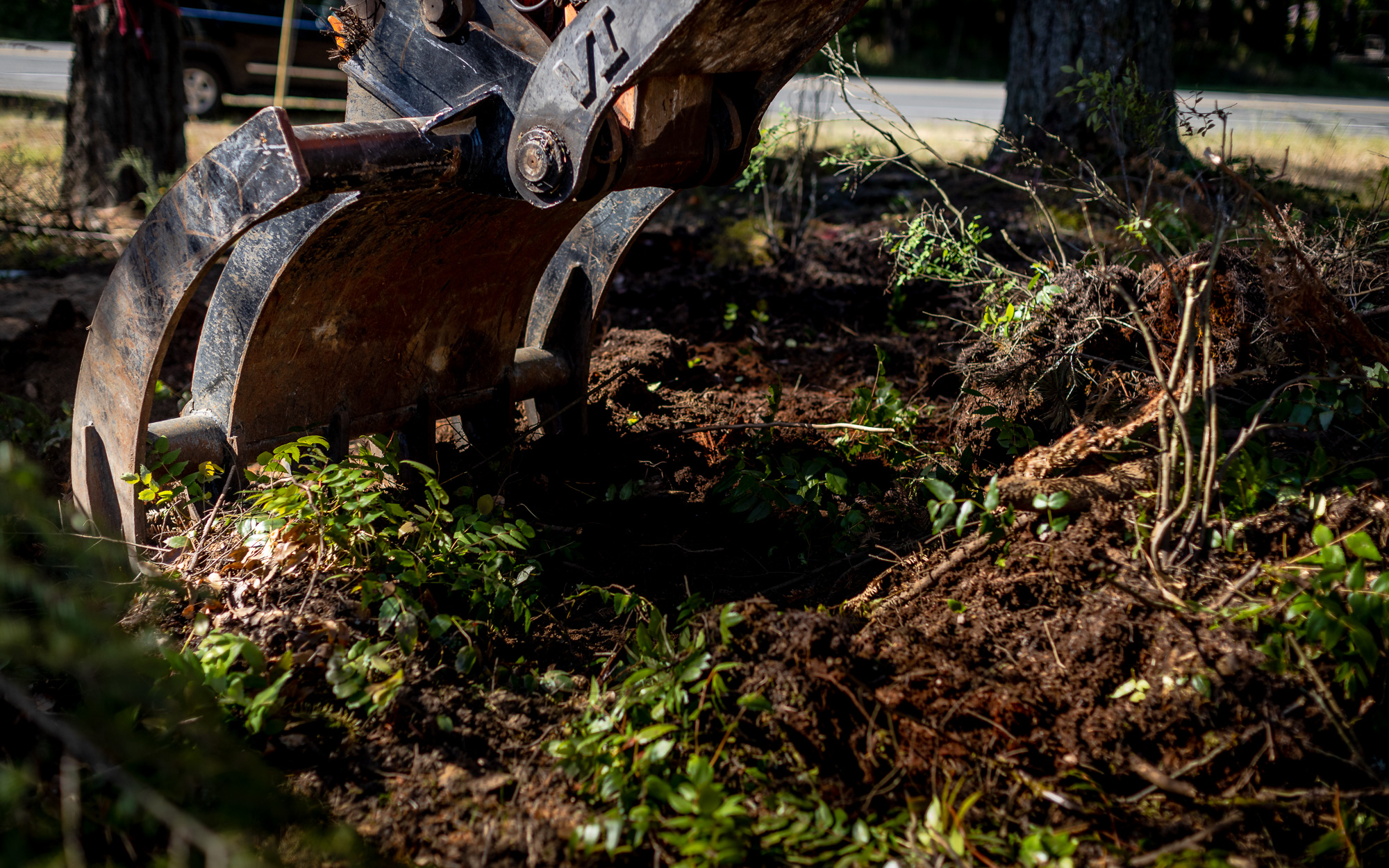 Timberlane_Site_Trees_700-5.jpg