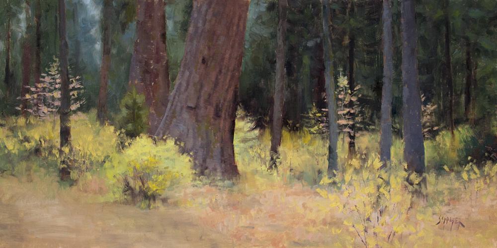 autumn sequoias