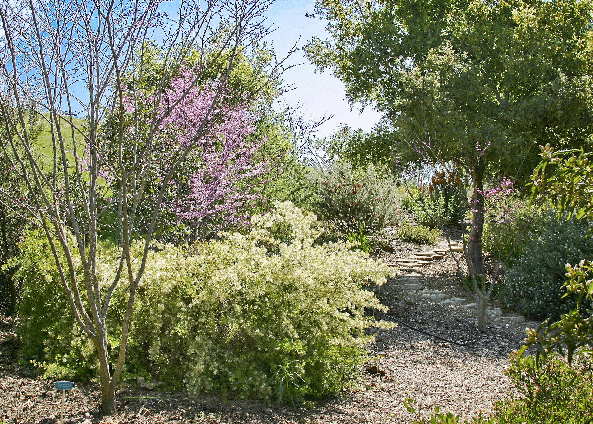 1 San Luis Obispo Botanical Garden.jpeg